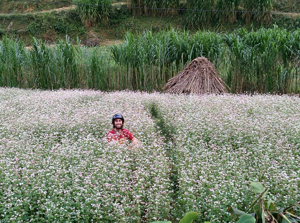 ha giang buckwheat flower festival